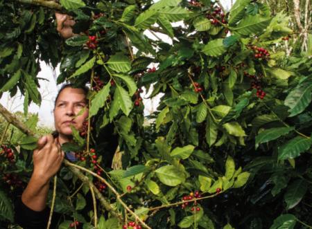 Café especial em Pernambuco? Conheça a Yaguara Ecológico!