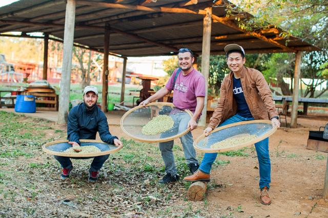 Os três baristas brincam com grãos verdes nas peneiras