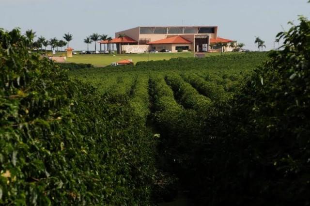 cafe_fazenda_octaviocafe