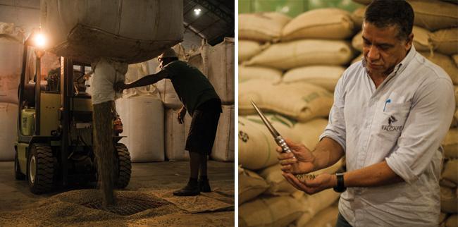 Reinaldo Honorato Neves mostra os cafés prontos para exportação no armazém, que é equipado com controle de umidade e maquinário de ponta