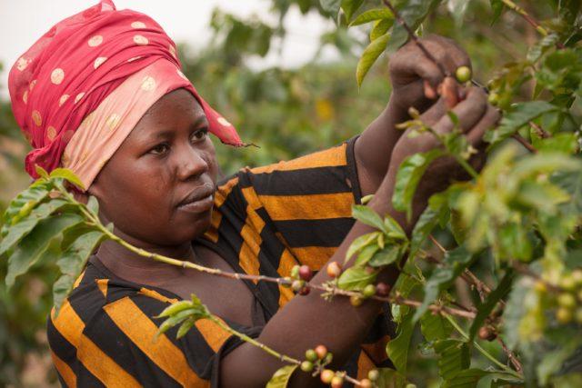ruanda bloomberg