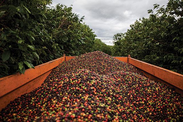 Entre o campo e o beneficiamento, Zito descobriu sua vocação para o café. Hoje, o produtor passa boa parte da semana no Sítio Água da Mata